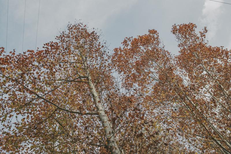 preboda en otoño